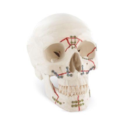 Traumatologie de la face